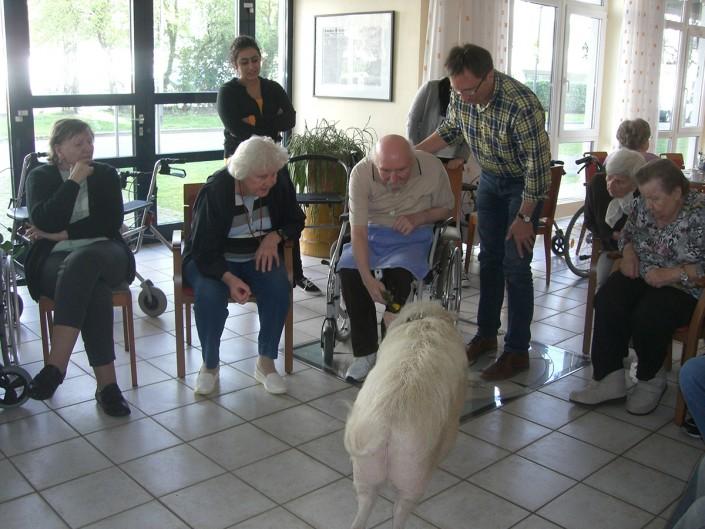 Ferdinand Dienst Haus -Seniorenheim Herne - Besuch des Therapieschweins Rudi 2015